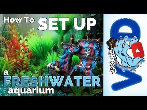 How To Set Up A Freshwater Aquarium | Big Al's
