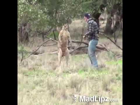 Madlipz Los My Hond