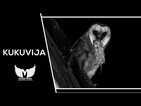 Kukuvija (Ptica zloslutnica) - Ako naletite na nju, nemojte joj se rugati!   Urbana Legenda