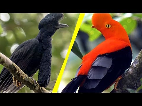 5 Most Unique Exotic Birds In The World!