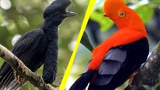 5 Most Unique Exotic Birds In The World! thumbnail