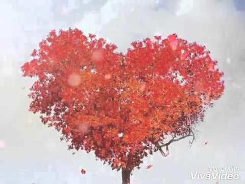 Liebes Sprüche Und Bilder