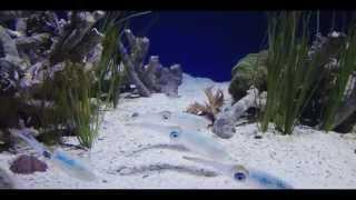 Veritas Arcana - Calamares and friends