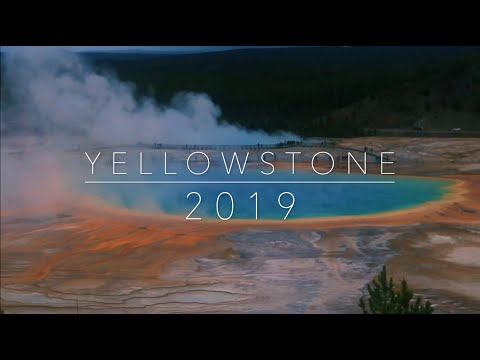 Yellowstone Vacation 2019 | grizzly bear cub sighting