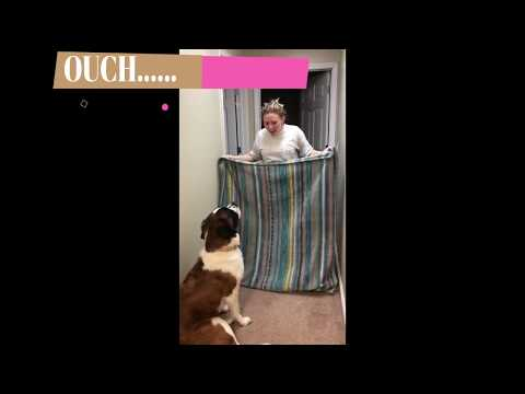 dog blanket magic trick fail
