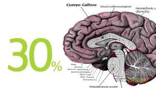 ¿porque es importante conocer las diferencias entre cerebro masculino y femenino?