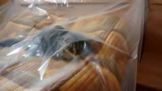 Кот под пленкой