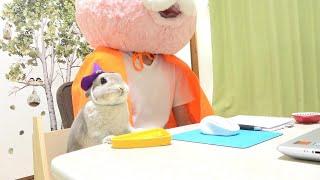 ハロウィンが近いのでうさぎさんと仮装してリモート会議に参加したった