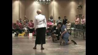 The 2012 Dachshund National Specialty Show