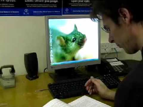 Ethics / Animal Rights
