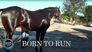 Black Caviar - Born To Run (2012) dir. Hussain Neissi - MAPS Film School