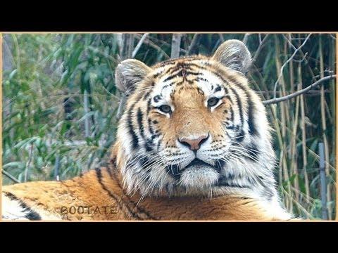 Bronx Zoo Presents Most Beautiful Animals In The World ... Bronx Zoo Animals