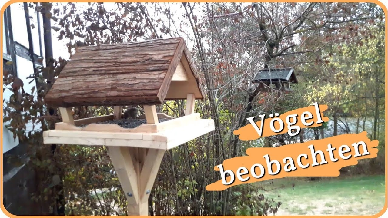vögel beobachten am vogelhaus  vögel am futterhaus  youtube