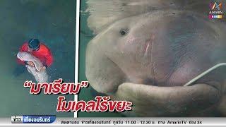 """ข่าวเที่ยงอมรินทร์_""""มาเรียม"""" กับการตื่นตัวรักษ์ """"พะยูน""""ในทะเลไทย (200862)"""