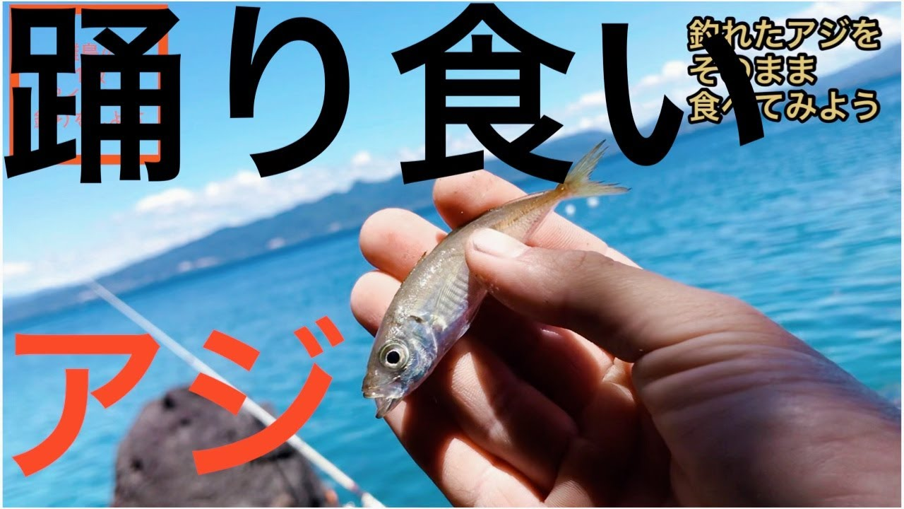 【検証】離島の1級ポイントなら素人でも釣れるのか Fishing at the best point of our island.