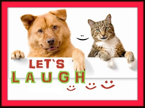 Very funny dogs and cats video - Compilation 2015