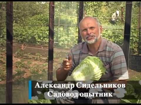 Пекинская капуста 83 рецепта приготовления пошагово