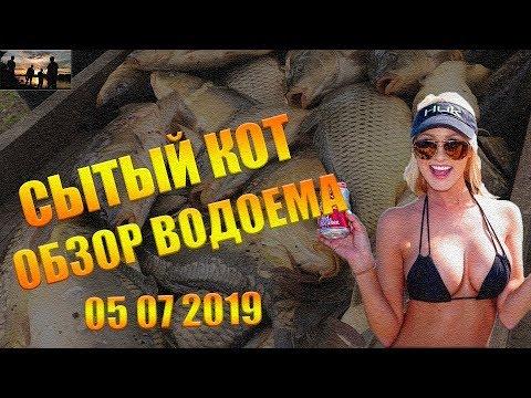 Сытый кот Хатунь 05 07 2019 / Обзор водоема