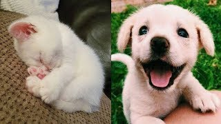 Funniest Animals In The World - Super Cute Pets