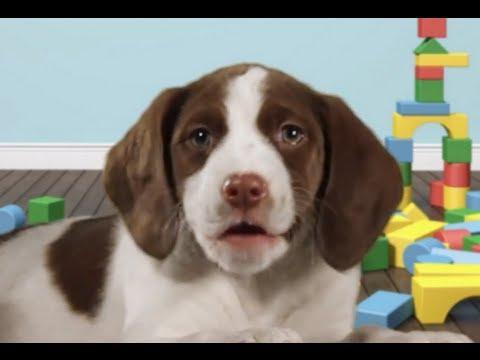 Happy Birthday To You Song Happybirthdaydogs Com Youtube