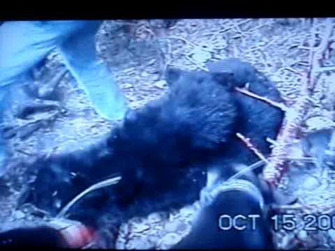 BEAR KILLS DOG while hunting