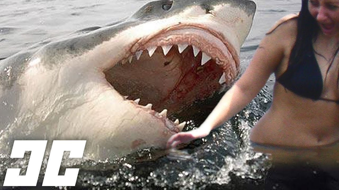 The Most Brutal Shark Attacks Youtube