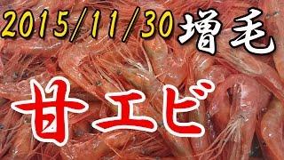 本日水揚げの増毛のエビです。 本日で増毛地区今期エビ篭漁終了のため 次回は2016年3月になります。