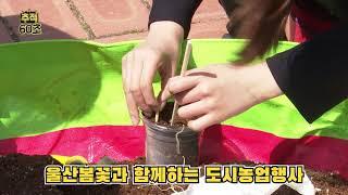 [추적60초] 울산봄꽃과 함께하는 도시농업행사