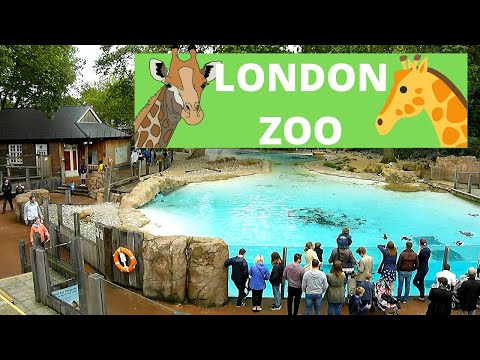 Travel and Sightseeing - London Zoo Wildlife Tour Experience - Blue Orca Digital - Animals Galore!