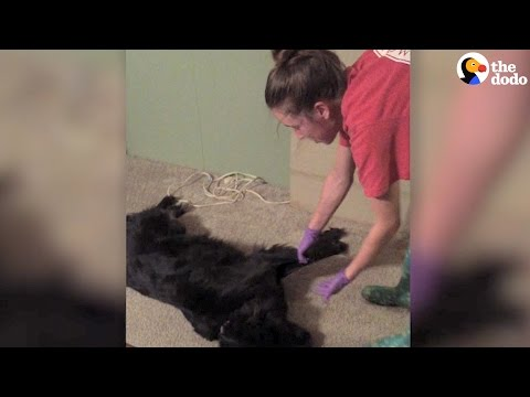 Dog Plays Dead To Avoid Bath | The Dodo