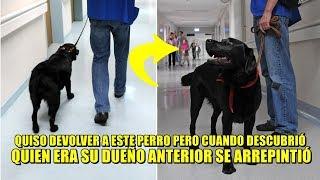 Hombre quiso devolver al perro que adoptó, luego se arrepintió al saber quien era su dueño anterior.