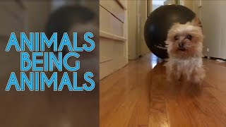 Funny Animal Videos Getting You Through The Day