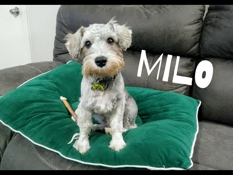 Meet Milo | Dog Mom Life
