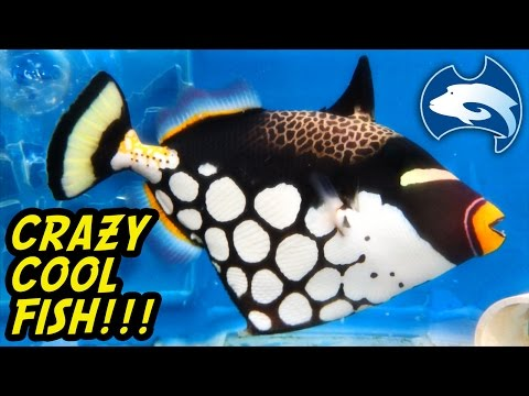 Cairns Marine 's Incredible Fish Stock, Australia Tour Part 8