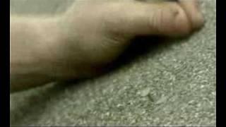 """Midlake: Videos of Van Occupanther Pt. 7 - """" Roscoe """""""