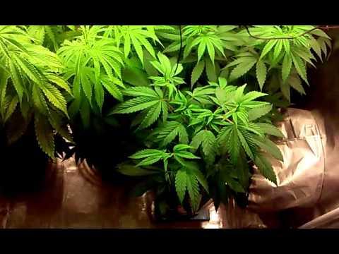 2X4 grow tent update