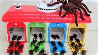 Tayo, Thomas, Cars, giant spider funny story