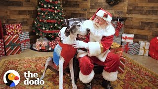 Shelter Dog Gets The Best Surprise For Christmas | The Dodo
