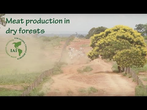 Meat production in dry forests