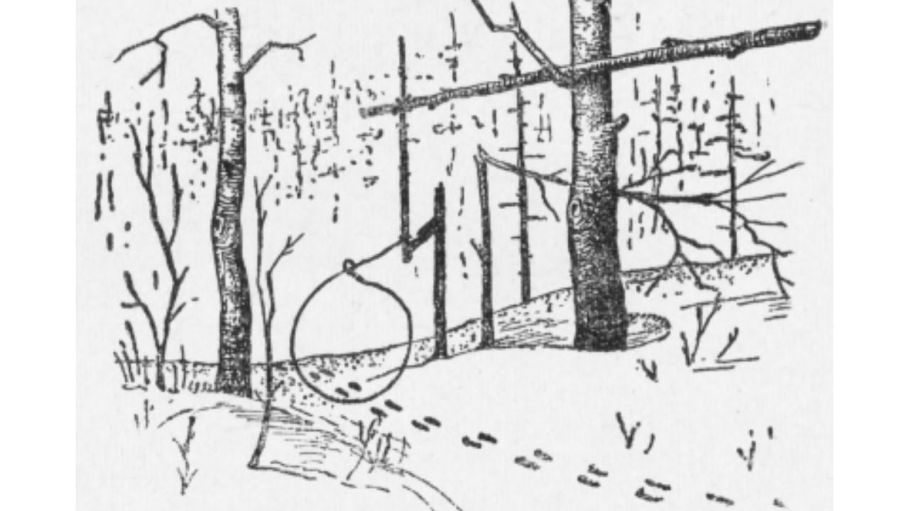 данный картинки ловушек на зайца помощью уникальной