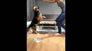 Greek dog loves to dance.