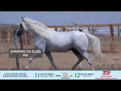 LOTE 1019   RESPALDADA DA ELIZA