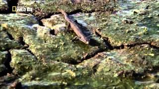 Дунай (серия 2) - Европейская Амазонка Леса,разливы,морозы