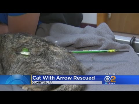 Pennsylvania Woman Finds Cat With Arrow Stuck Through Its Back On Her Doorstep