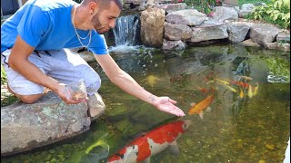 new-colorful-fish-added-to-pond
