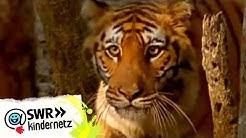 OLI bei den Tigern | OLIs Wilde Welt | SWR Kindernetz