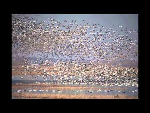 Squaw Creek National Wildlife Refuge Mound City, MO