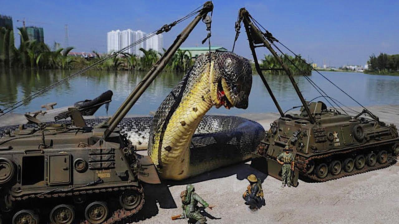 Download 10 Schockierend große Tiere, die per Zufall gefunden wurden!