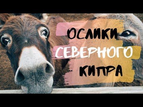 СЕВЕРНЫЙ КИПР: КАРПАЗ И ОСЛИКИ / NORTH CYPRUS: KARPAZ AND DONKEYS