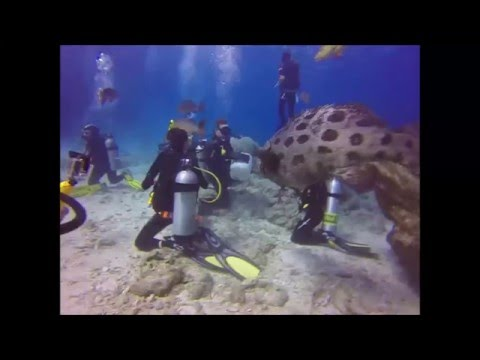 Great Barrier Reef 2014 with Deep Sea Divers Den Taka Ribbon Reef Explorer